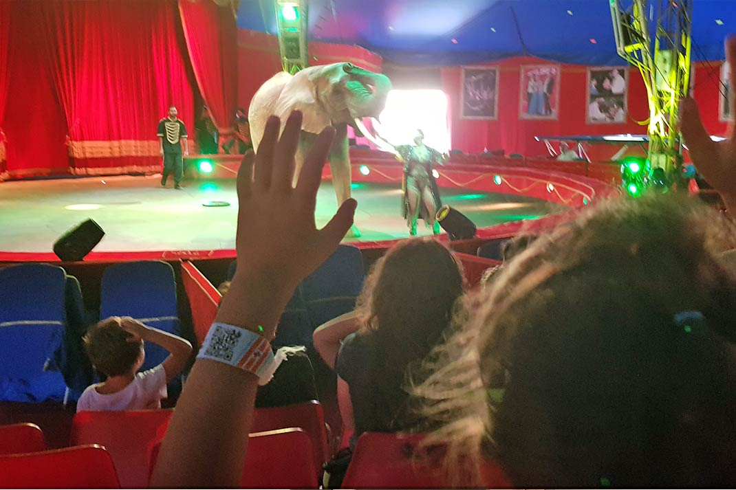 safety-qr-code-bracciale-circo